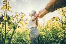 Young Couple Walking Through Rape Field In Sunny Day. Close-up Portrait Playful Woman Leading Man Holding By Hand Happily Smiling And Have Fun While Goes Between Stems With Yellow Flowers.