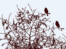 Vector Illustration Of Sparrows Sitting On Tree Branches In Autumn Season