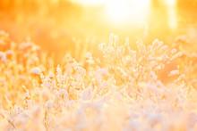 Plants Under Snow Pillow At Warm Sunlight