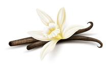 Vanilla Flower With Dried Vani...