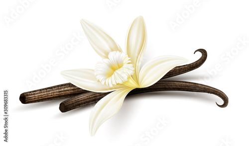 Cuadros en Lienzo Vanilla flower with dried vanilla sticks