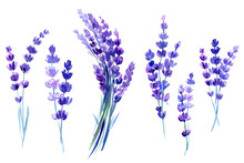 Set Of Lavender Flowers On An ...
