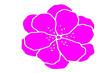 Leinwandbild Motiv pink flower isolated on white background