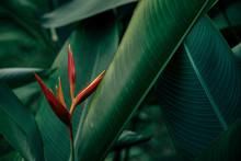 Green Leaf Texture, Dark Green...