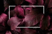 Tropical Leaves With White Frame, Abstract Purple Leaves, Small Green Leaves, Natural Purple Background