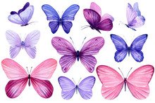 Tropical Pink And Purple Butterflies On An Isolated White Background, Watercolor Painting
