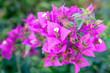 Leinwandbild Motiv purple flowers in the garden