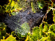 Water Bubbles In Spider Web With Bushes Leaves