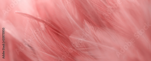 Image nature art of wings bird,Soft pastel detail of design,chicken feather texture,white fluffy twirled on transparent background wallpaper Abstract. Coral Pink color trends and  vintage. - 309711950