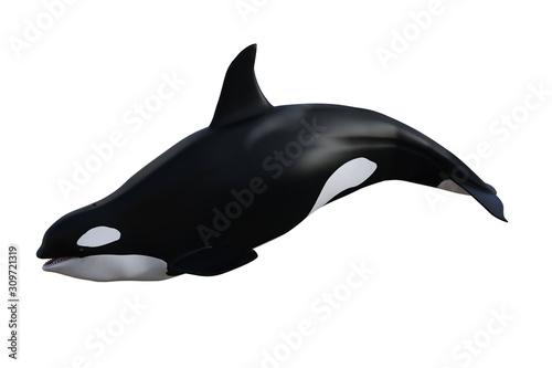 Fotografie, Obraz Killer Whale / Orca isolated on white, 3d render.