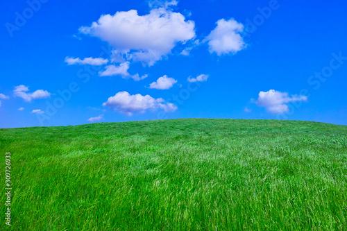 Fotografiet 草原と青空と雲