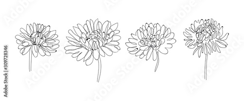 Fototapeta Continuous Line Drawing Set Of Plants Black and White Sketch of Flowers Isolated on White Background. Flowers One Line Illustration. Vector EPS 10. obraz