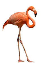 Bright Orange Flamingo Standin...