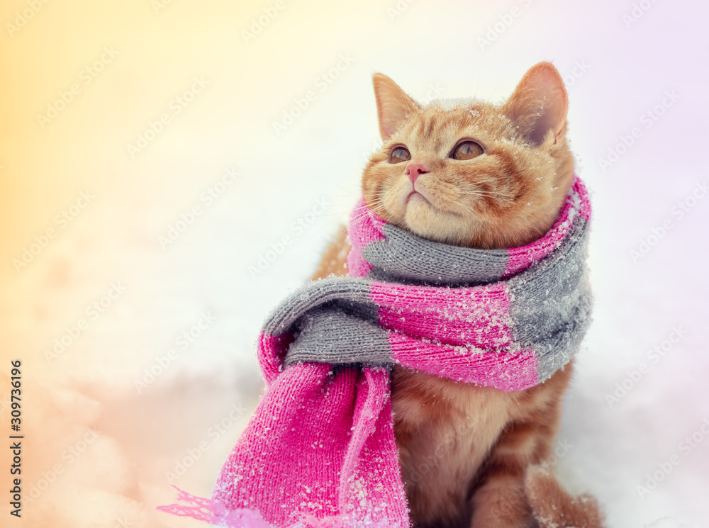 Portrait of a little ginger kitten dressed in a knitted scarf outdoors in winter