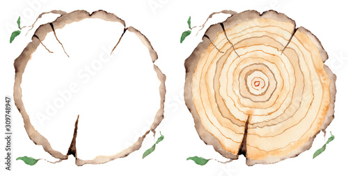 Valokuva Wood slice. Tree rings. Watercolor illustration.