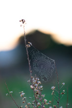 Wet Spider Web On Dry Bush Branches With Blurred Background