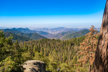 Sequoia National Park In Calif...