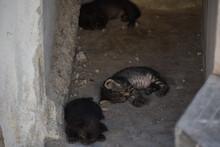 Three Baby Kittens Sleeping In...
