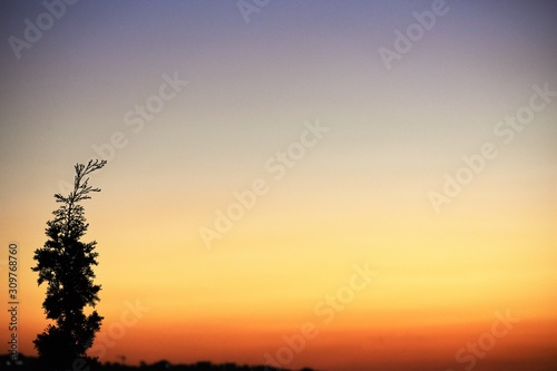 plakat Tree silhouette and orange sunset sky