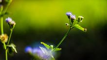 The Small Purple Flowers Beautiful Pretty