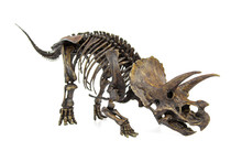 Fossil Skeleton Of Dinosaur Th...