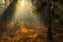 Forest. Autumn. A Pleasant Wal...