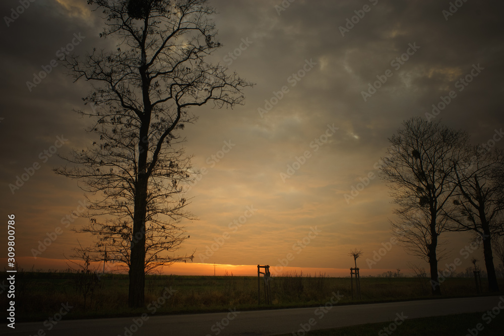 Sunset, trees and fields. Picture next to the road.