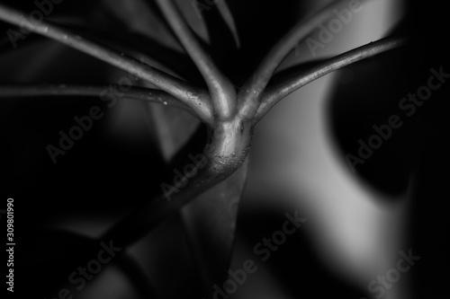 Fototapeta Abstract vegetation obraz