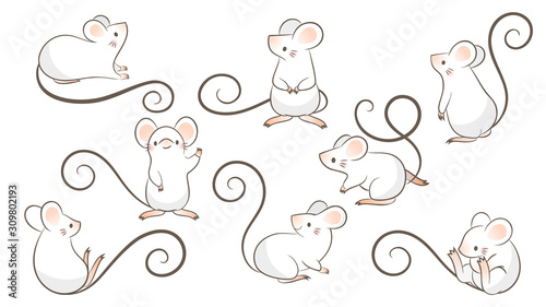 Fototapeta Set of hand drawn rats, mouse in different poses on white bacground