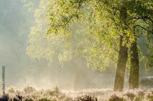 Fototapeta jesień   heideveld-beisbroek-brugge