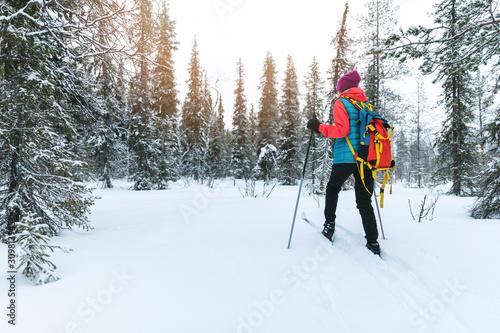 obraz PCV ski touring in the deep fresh snow, Yllas, Lapland, Finland