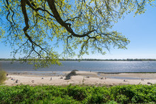 Tree Branches Overhanging The Beach At The Elbe River In Wedel, Germany