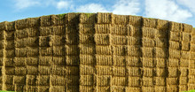 Sheaves Of Hay Stacked Into Wall On The Field In England Uk On A Sunny Day