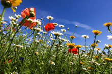 Wild Flowers On A Summer's Day