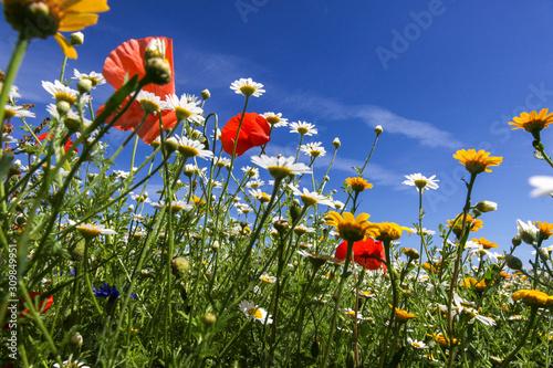 Obraz na plátně Wild flowers on a summer's day