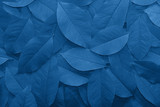 Background from autumn fallen leaves close-up in color Pantone classic blue 2020. Color of the year.