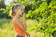 Girl With Pleasure Eating Delicious Sweet Ripe Berries From Mulberry Tree