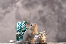 Rat Next To The Christmas Tree Toys