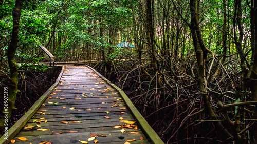 Boardwalk /wooden pathway surrounded with mangrove plants at Kutai National Park Canvas Print