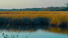 A Typical Salt Marsh From The ...