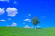 Leinwanddruck Bild - 草原と白樺の木と青空