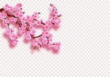 Sakura. Branches With Pink Flo...