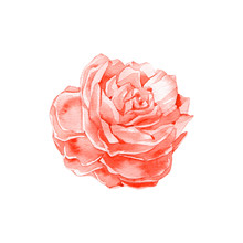 Handmade Watercolour Tender Red Flower. Watercolor Abstract Rose