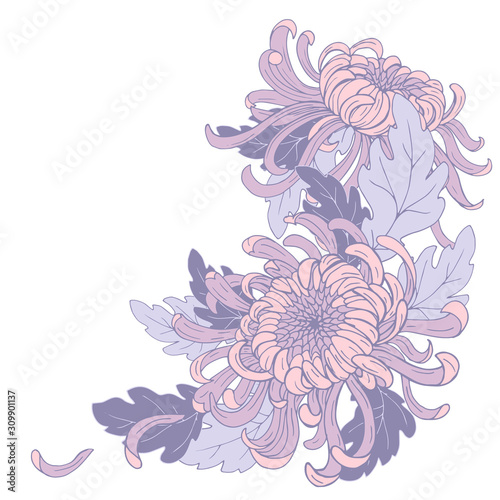 Fotografiet Chrysanthemum flowers and leaves, composition for design, vector illustration