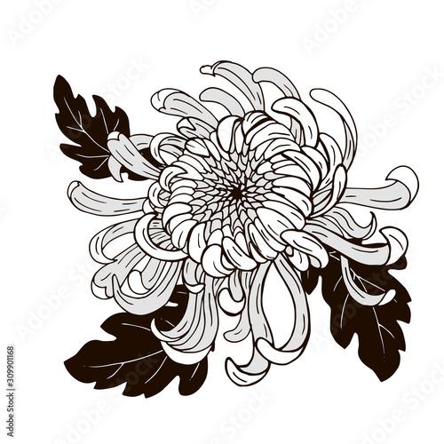Canvas Print Chrysanthemum flower, black and white vector illustration