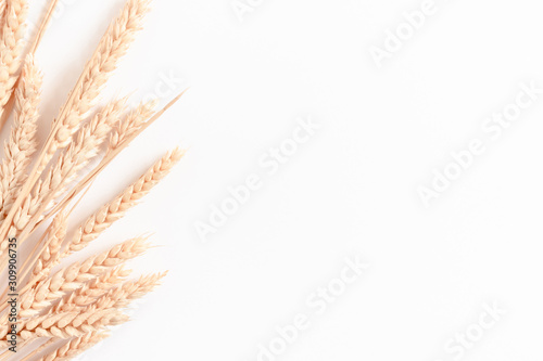 Fotografía Bouquet of wheat spikelets on white background with copy space