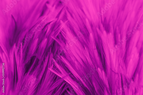 Beautiful abstract colorful white and red feathers on black dark background and soft white pink feather texture on white pattern - 309912736