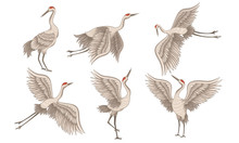 Realistic Red-crowned Crane In...