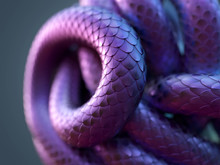Snake Body Curled Up In A Ball