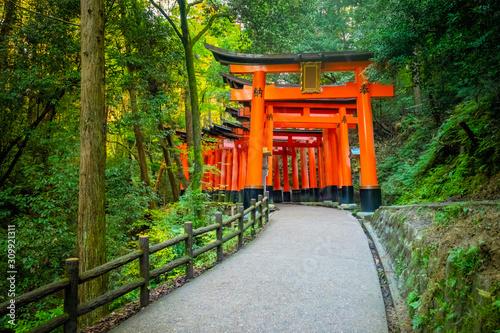Fototapeta premium Japonia. Kioto. Pomarańczowe bramy świątyni Fushimi Inari. Świątynia Fushimi Inari Taisha. Góra Inariyama w Japonii. Wejście do świątyni Torii Shinto w Kioto. Pomarańczowa brama wśród drzew.